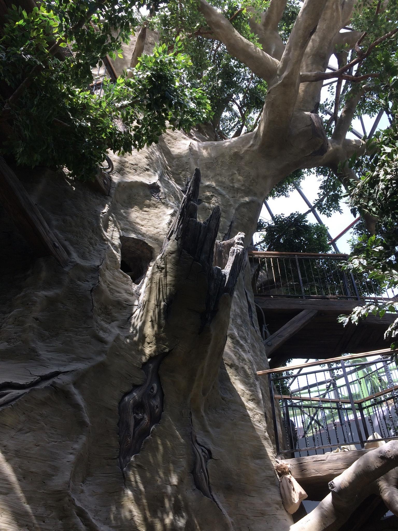 дерево в парке мрия