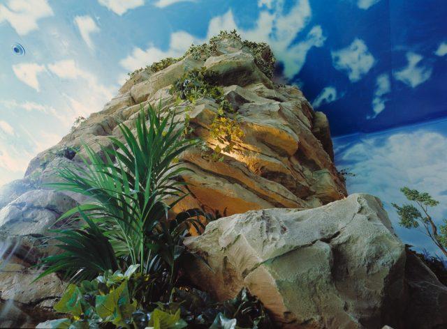 Оформление скалы растениями